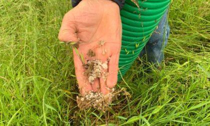 Sale grosso sulle radici per uccidere le piante dell'oasi naturale