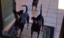 Veleno per topi gettato nel giardino di casa: gravi i tre cani di famiglia