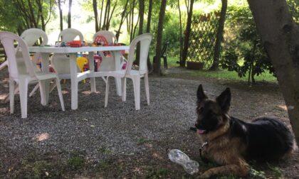 Sedie e tavoli rotti o rubati: nel mirino il giardino curato da un'anziana volontaria