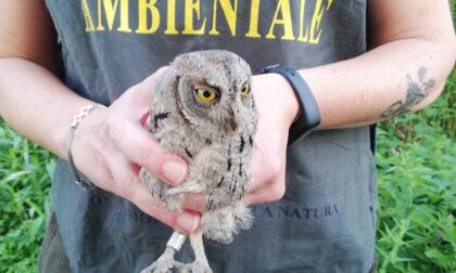 Il Wwf ha liberato tre rapaci curati dal Cras nell'Oasi dell'avifauna di Pozzuolo