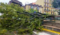 Il maltempo fa danni: alberi crollati e disagi