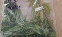 Tassista coltivava marijuana sul balcone di casa
