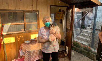Accudisce duecento gatti da trentadue anni: ora ha bisogno di aiuto