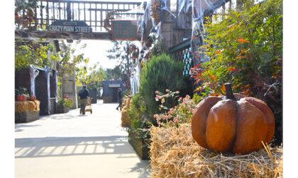 It's Crazy Halloween a Inzago: da Aquaneva week-end... da paura